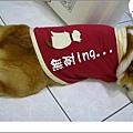 IMG_8964.jpg