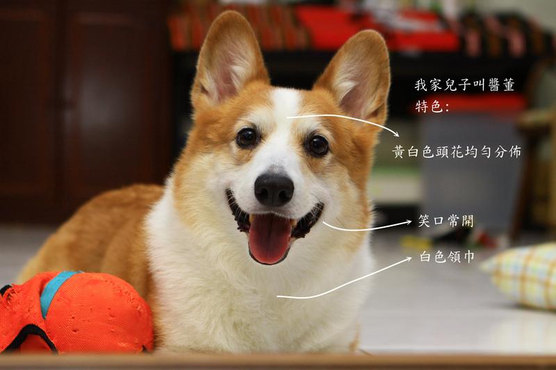AJON介紹.jpg