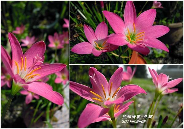 2011-08-韭蘭25.jpg