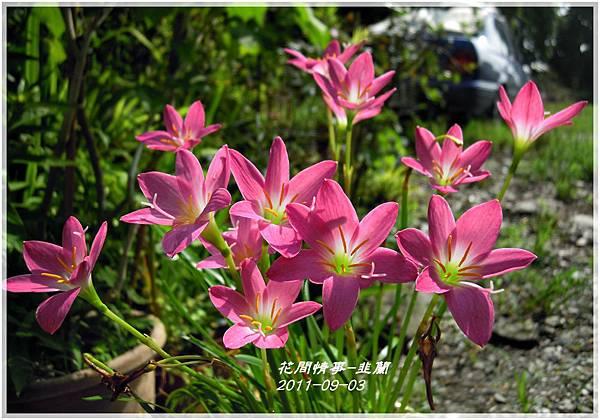 2011-08-韭蘭13.jpg