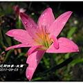 2011-08-韭蘭17.jpg