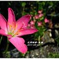 2011-08-韭蘭18.jpg
