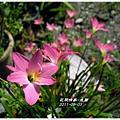 2011-08-韭蘭19.jpg