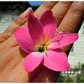 2011-08-韭蘭20.jpg