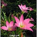 2011-08-韭蘭22.jpg