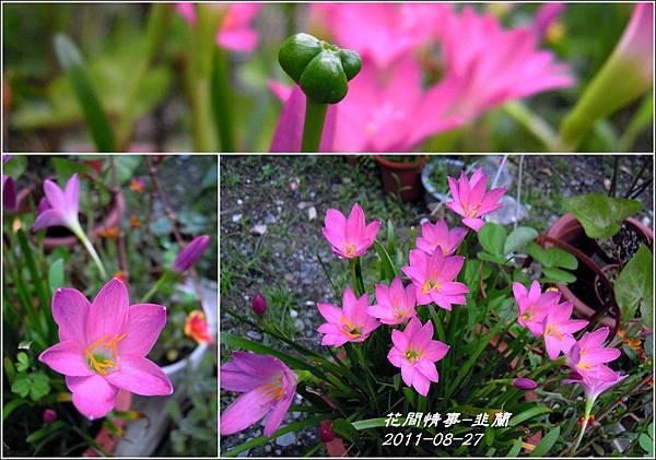 2011-08-韭蘭3.jpg