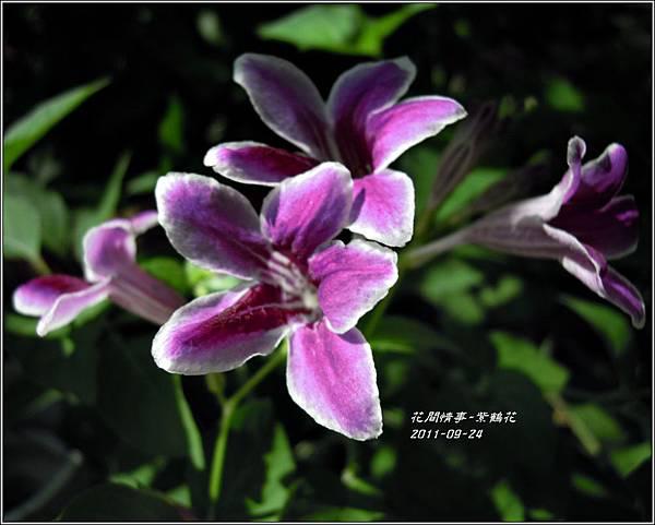 2011-10-紫鶴花4.jpg
