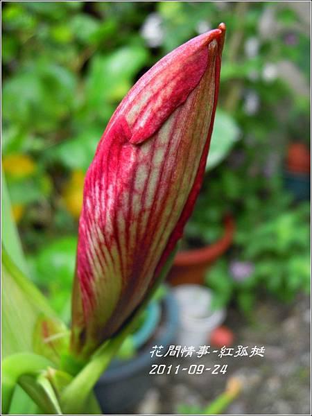 2011-09-大紅孤2.jpg