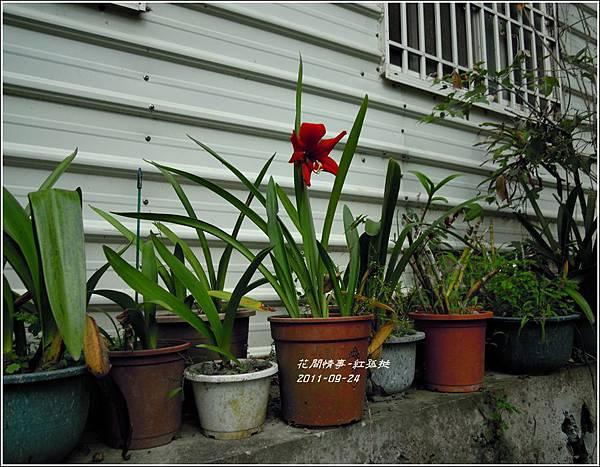2011-09-大紅孤3.jpg