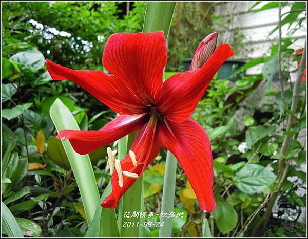 2011-09-大紅孤4.jpg