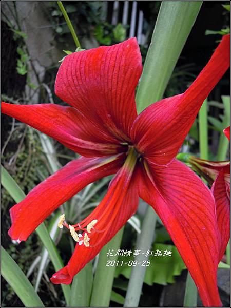 2011-09-大紅孤7.jpg
