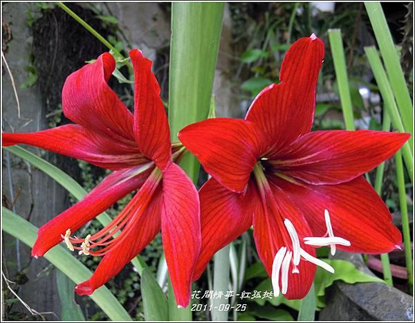 2011-09-大紅孤8.jpg