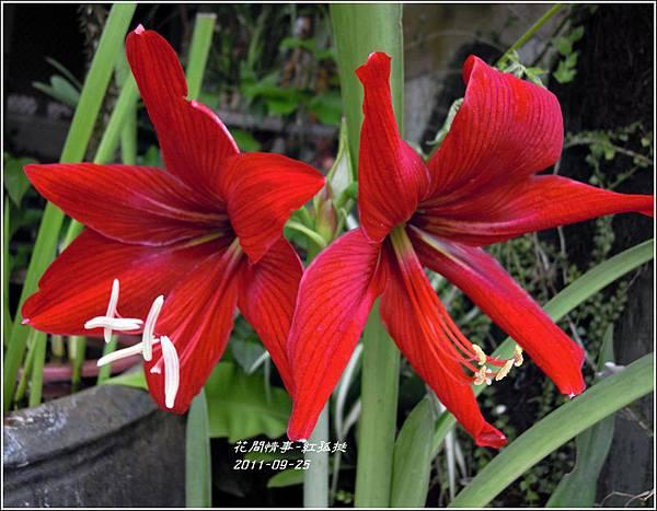 2011-09-大紅孤10.jpg