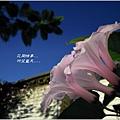 2011-10-樹牽牛1.jpg