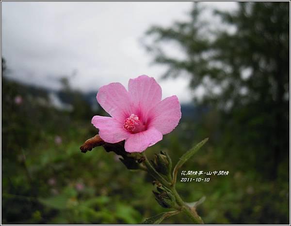 2011-10-山中閒情2.jpg