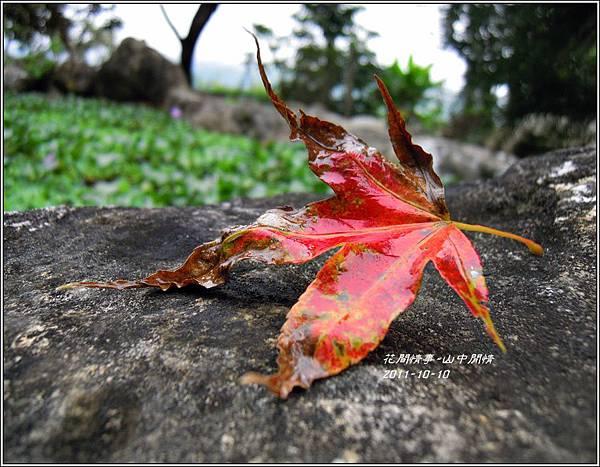 2011-10-山中閒情5.jpg