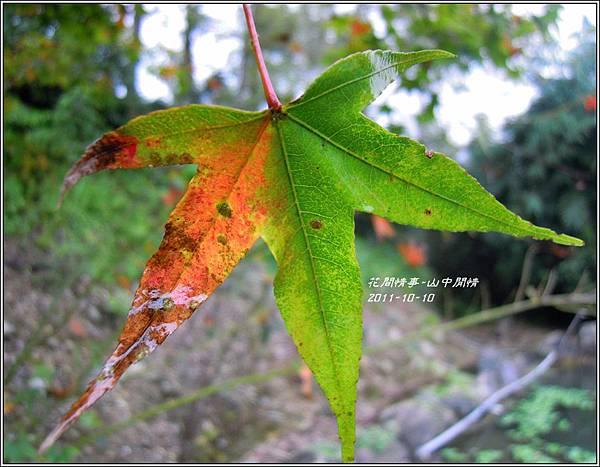 2011-10-山中閒情6.jpg