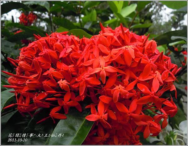 2011-10-大王仙丹2.jpg
