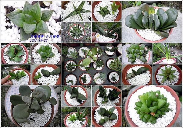 2011-10-多肉植物(綜合).jpg