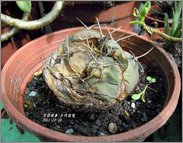 2011-10-多肉植物2.jpg