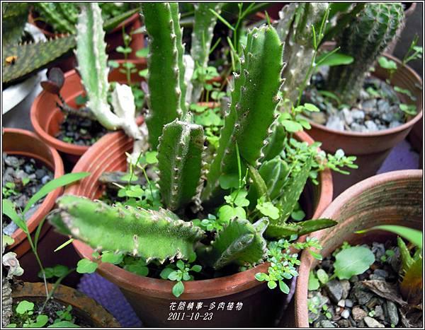 2011-10-多肉植物4.jpg