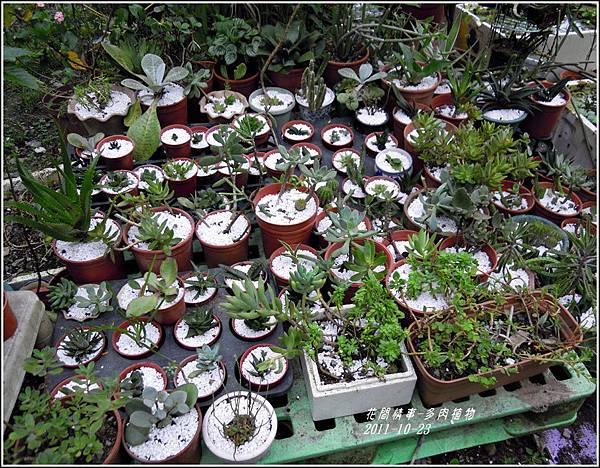 2011-10-多肉植物7.jpg
