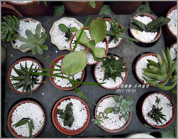 2011-10-多肉植物8.jpg