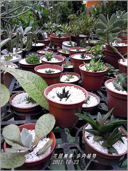 2011-10-多肉植物9.jpg