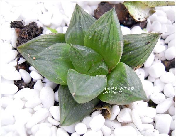 2011-10-多肉植物12.jpg
