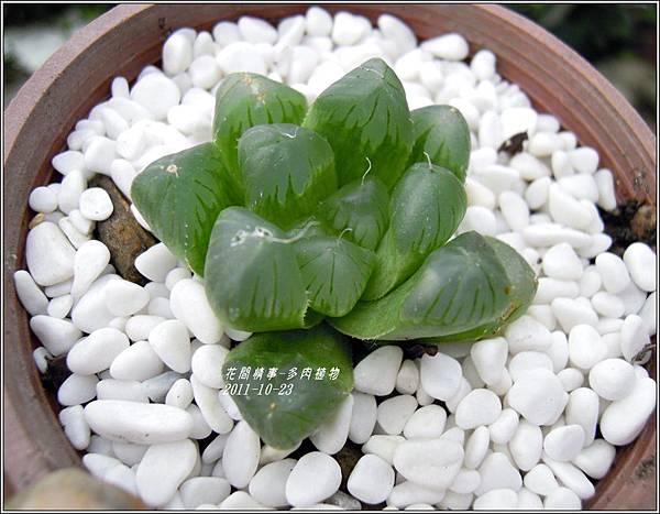 2011-10-多肉植物14.jpg