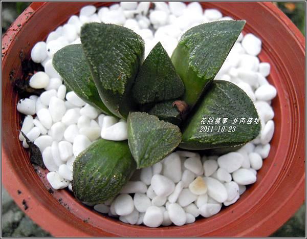 2011-10-多肉植物18.jpg