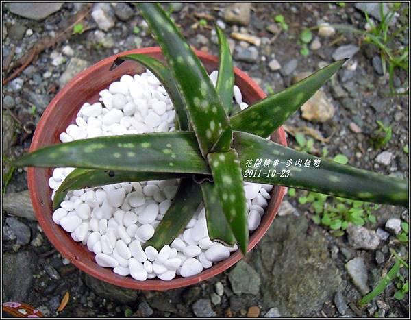 2011-10-多肉植物19.jpg