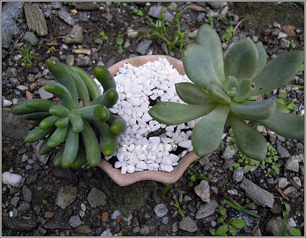 2011-10-多肉植物22.jpg