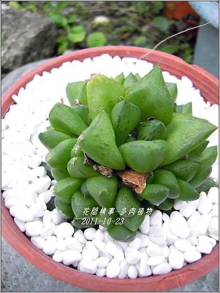 2011-10-多肉植物24.jpg
