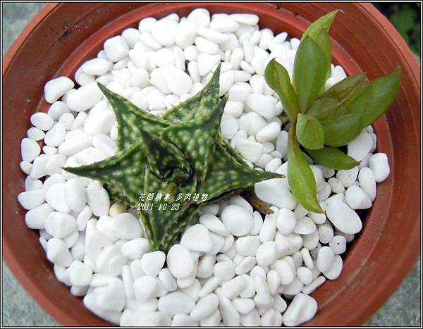 2011-10-多肉植物25.jpg
