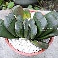2011-10-多肉植物26.jpg