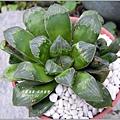 2011-10-多肉植物31.jpg