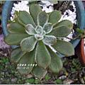 2011-10-多肉植物32.jpg
