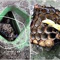 小蜂巢.jpg