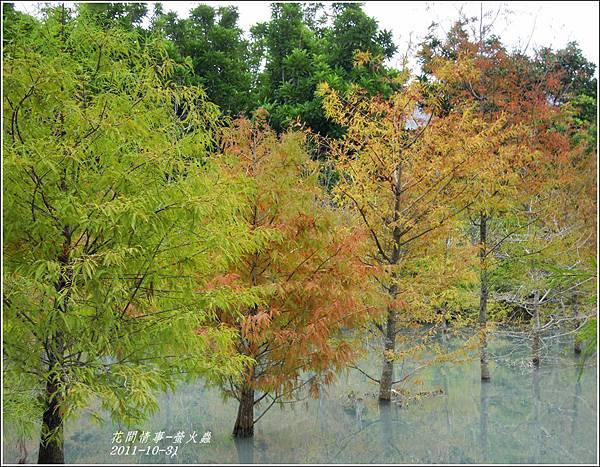 2011-10-雲山水的落羽松7.jpg