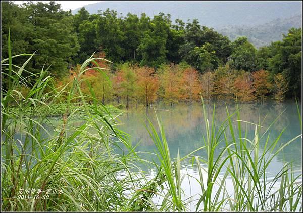 2011-10-雲山水的落羽松1.jpg