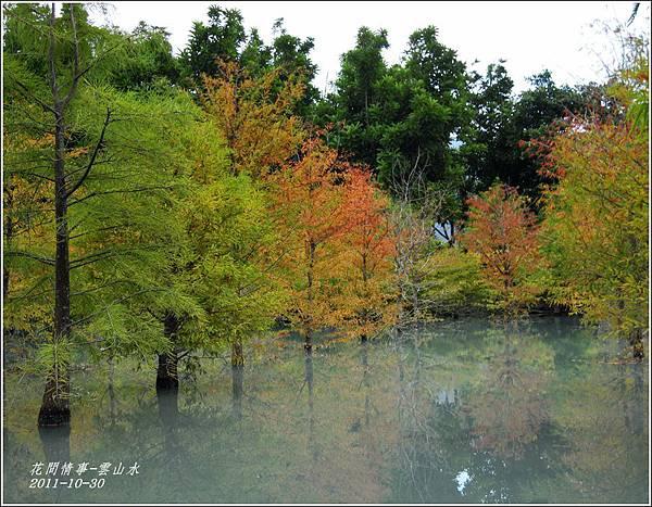 2011-10-雲山水的落羽松2.jpg