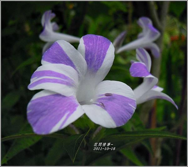 2011-10-假杜鵑5.jpg