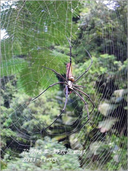 2011-11-蜘蛛3.jpg