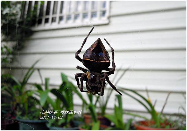 2011-11-蜘蛛1.jpg