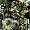 2011-11-多肉植物31.jpg