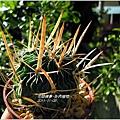 2011-11-多肉植物11.jpg