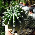 2011-11-多肉植物12.jpg