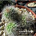 2011-11-多肉植物13.jpg