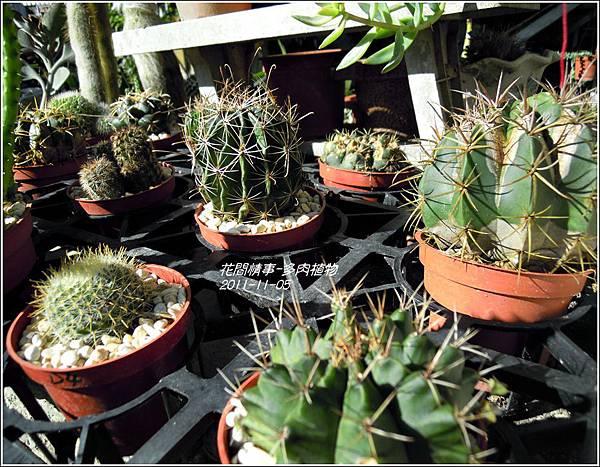 2011-11-多肉植物16.jpg